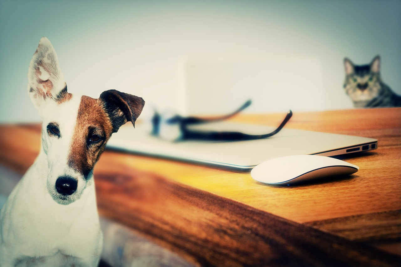 Today is Love Your Pet Day | Podcasts For Pet Lovers
